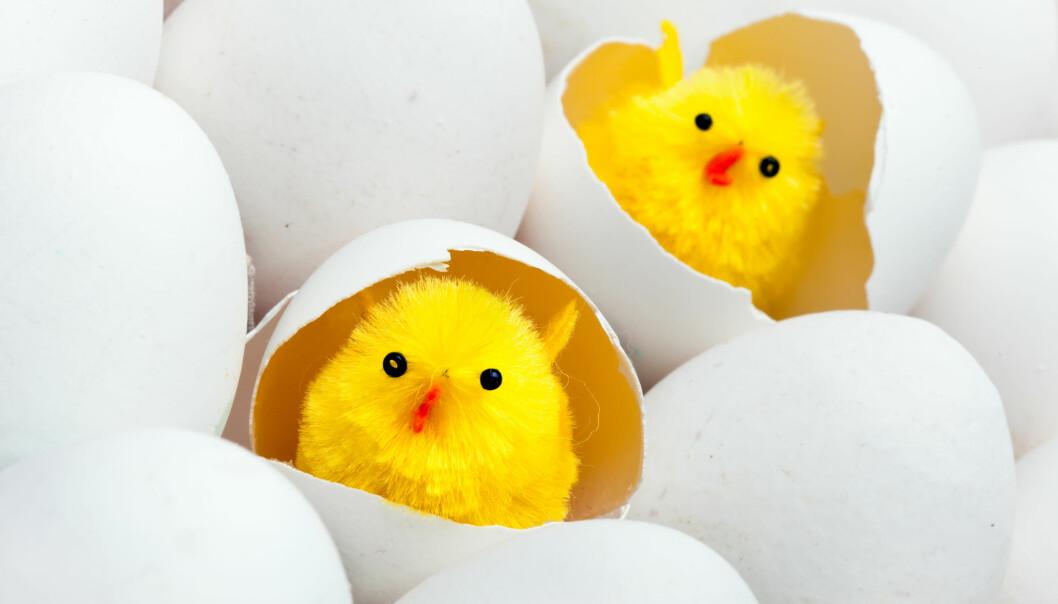 9 påskefakta om eggeskallet