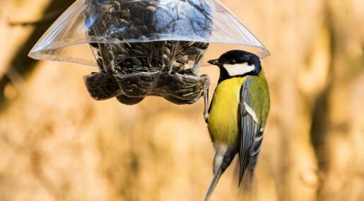 Her er professorens råd om fuglemating
