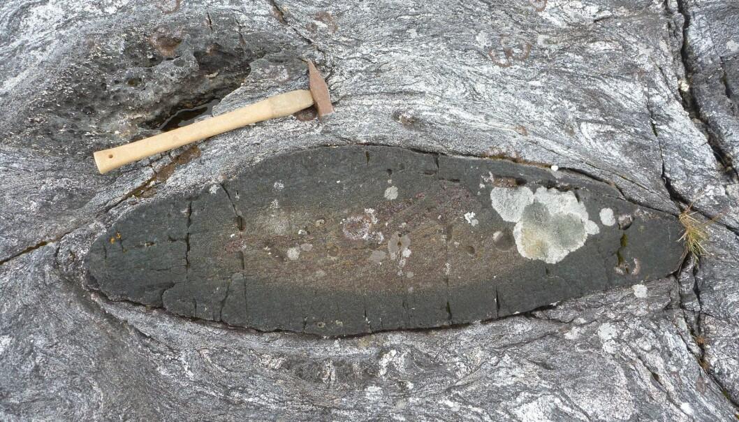 Har du sett dem? De små mørke bitene som finnes rundt i gneisene på Vestlandet - er du heldig finner du bevart eklogitt i kjernen av dem. (Foto: Ane K. Engvik)