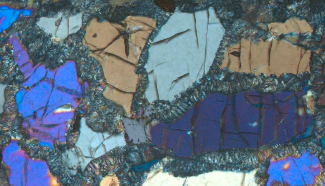Her ser du eklogitt under mikroskopet. De fargerike krystallene er pyroksen-mineralet omfasitt karakteristisk for bergarten. (Foto: Ane K. Engvik)