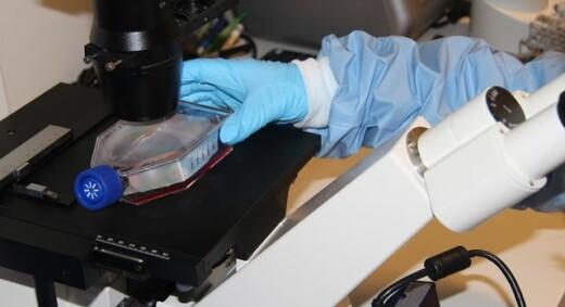 Jakter etter nye medisinkombinasjoner mot aggressiv brystkreft