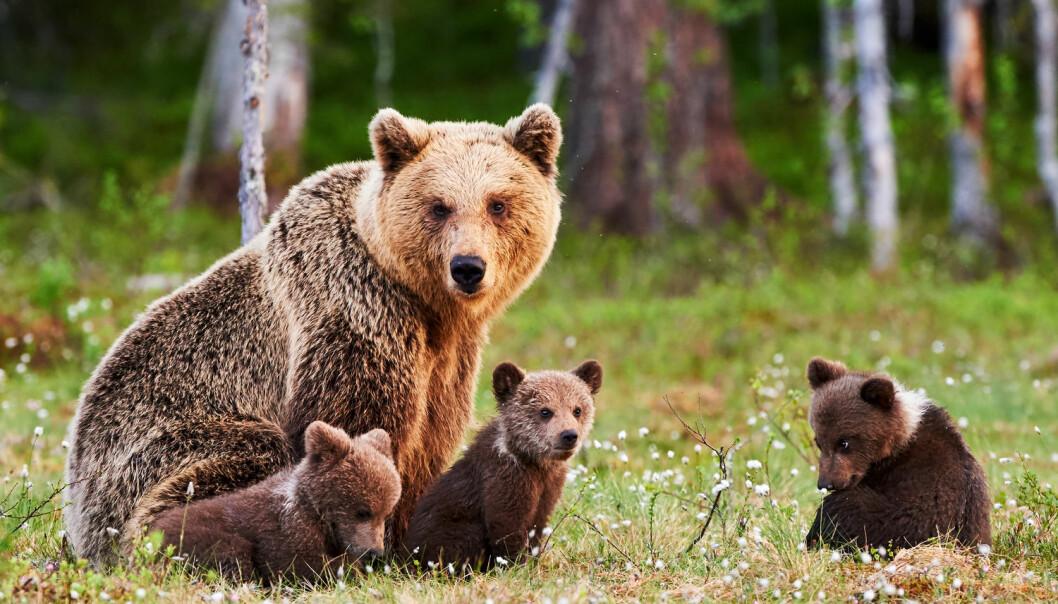 I dag følger flere unger moren et ekstra år, i motsetning til for 15 til 20 år siden, forteller forsker. (Illustrasjonsfoto: Shutterstock / NTB Scanpix)
