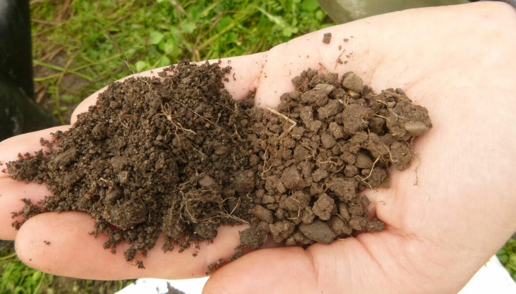 Karbonholdige stoffer i jord vil helst brukes og ikke lagres, ifølge forskerne. (Foto: Reidun Pommeresche / NORSØK)