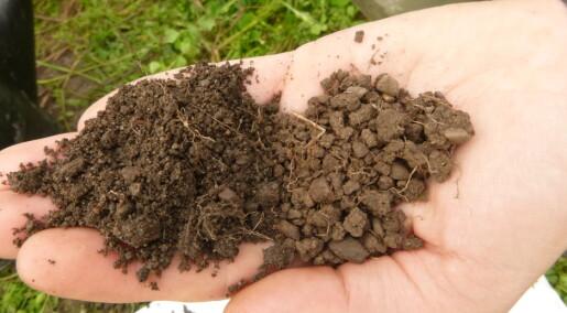 Forskeren forteller: Karbonlagring i jord er avhengig av både planter og jordliv