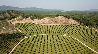 Forskere vil ikke forby palmeolje