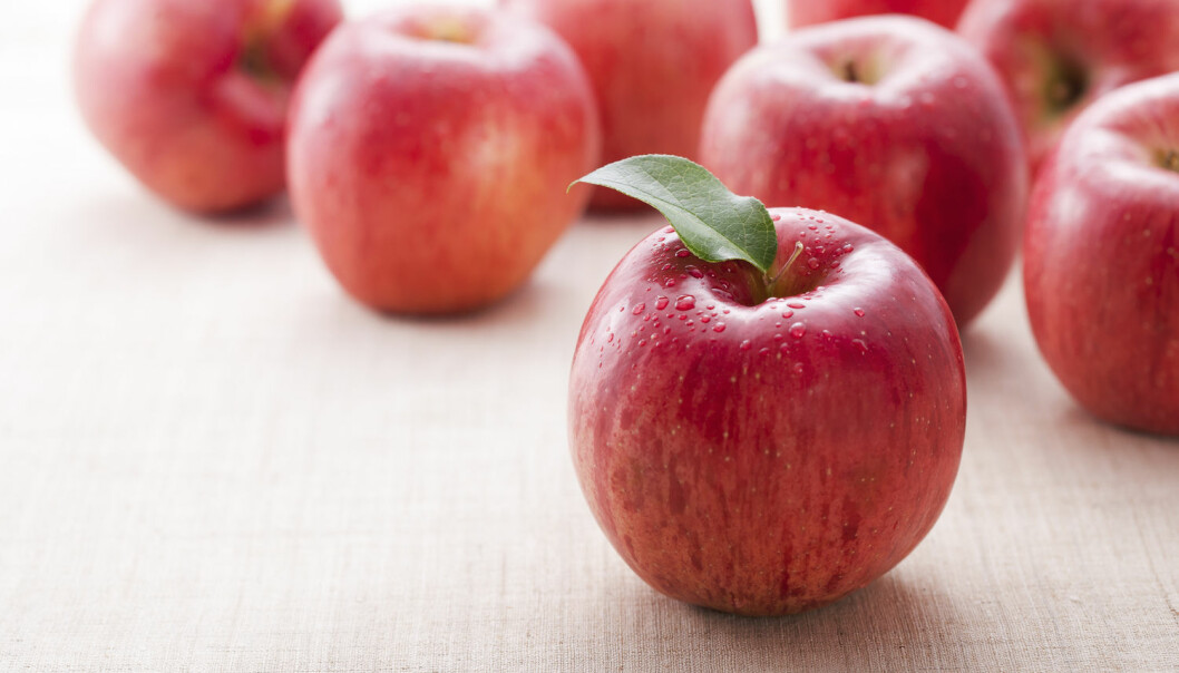 NMBU setter i gang et nytt forskningsprosjekt som skal øke Norges epleavlinger og gi bedre epler. (Foto: Shutterstock / NTB Scanpix)