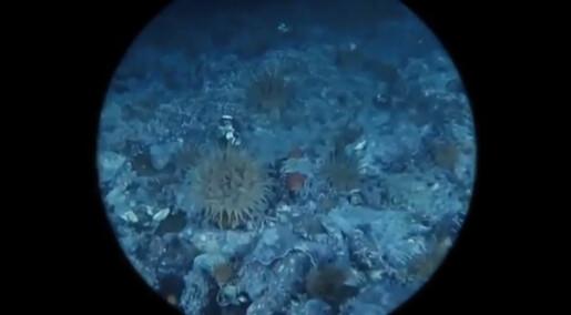 Hvordan høres det ut nedi havdypet?