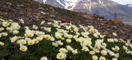 Ser du disse blomstene i fjellet, betyr det noe helt spesielt
