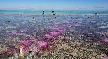 Slik påvirker CO2-utslipp korallrevene om 100 år
