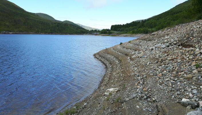 Hva skjer med fisken når innsjøer brukes som kraftmagasiner?