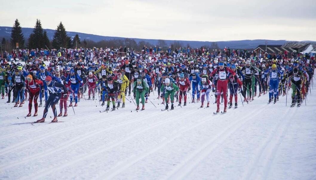 Det er voksne menn med penger og utdannelse som fyller skiløypene mellom Rena og Lillehammer. (Foto: Geir Olsen)