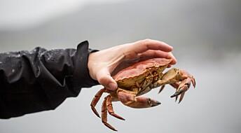 Slik unngår du giftige krabbeklør