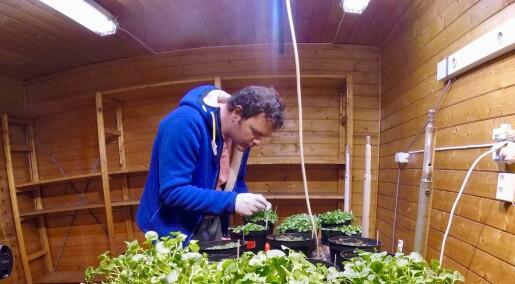 Hvordan har tre ulike plantearter tilpasset seg et liv i Arktis?