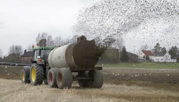 Husdyrgjødsel kan dekke hele behovet for fosfor