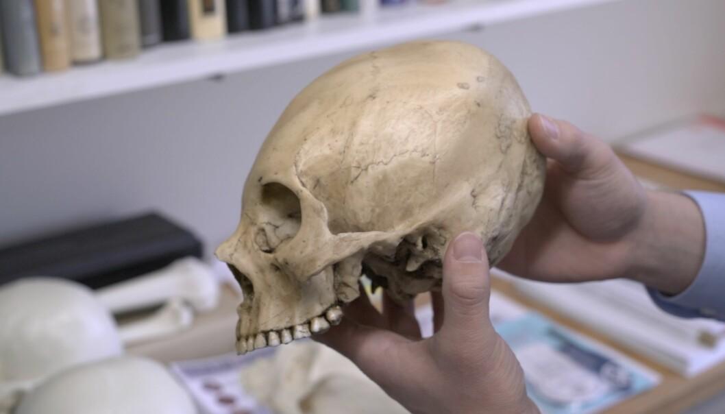 Urfolk i Peru surret for 700 år siden hodene til barna slik at skallen vokste på en bestemt måte. Den avlange formen ble etter hvert mest populær. Da ble de voksne hodene seende ut omtrent som denne kopien. Originalen er riktignok ikke fra Peru, men Bolivia. (Foto: Dan Chamberlain, College of Arts & Sciences, Cornell University)