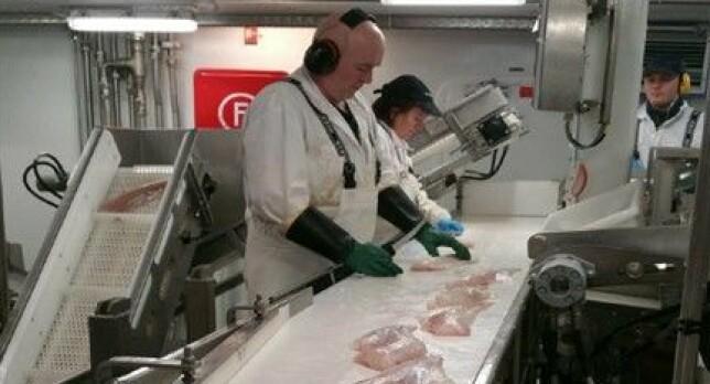Vil produsere beinfrie fileter om bord i tråleren