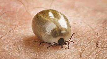 Gjennombrudd i testing av flåttsykdommer
