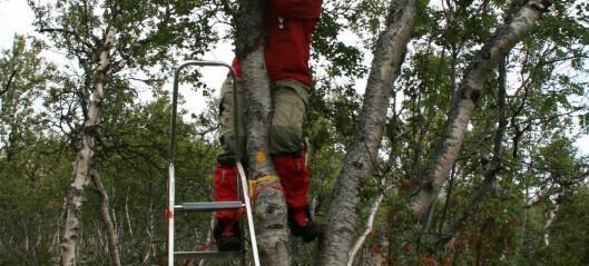 Til skogs med gardintrapp og målebånd