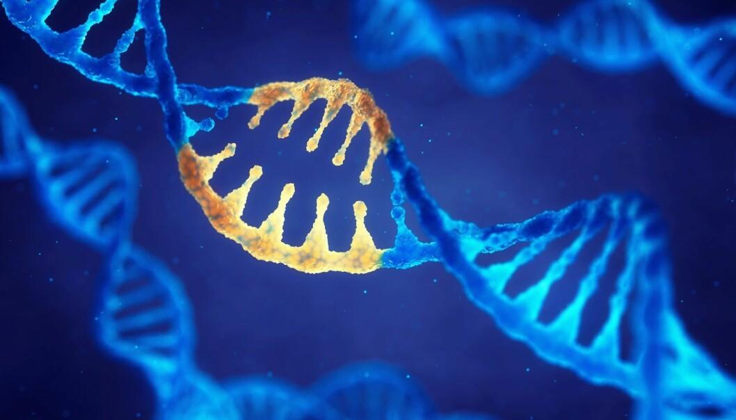 De har foreløpig bare fjernet gen-årsaken til Fragilt X syndrom i hjerneceller i et laboratorium, men forskerne skal teste teknikken sin videre på mus. (Illustrasjon: Shutterstock/ NTB scanpix)