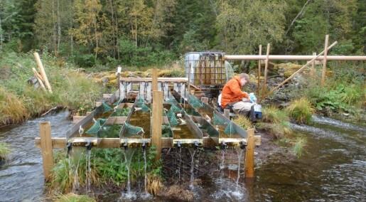 Kunstige elver avslører hvordan vi påvirker livet i vannet