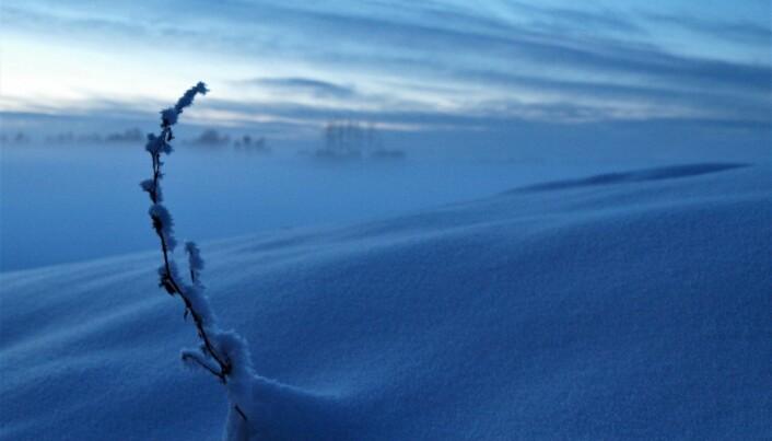 Nordnorske planter tåler vinteren best