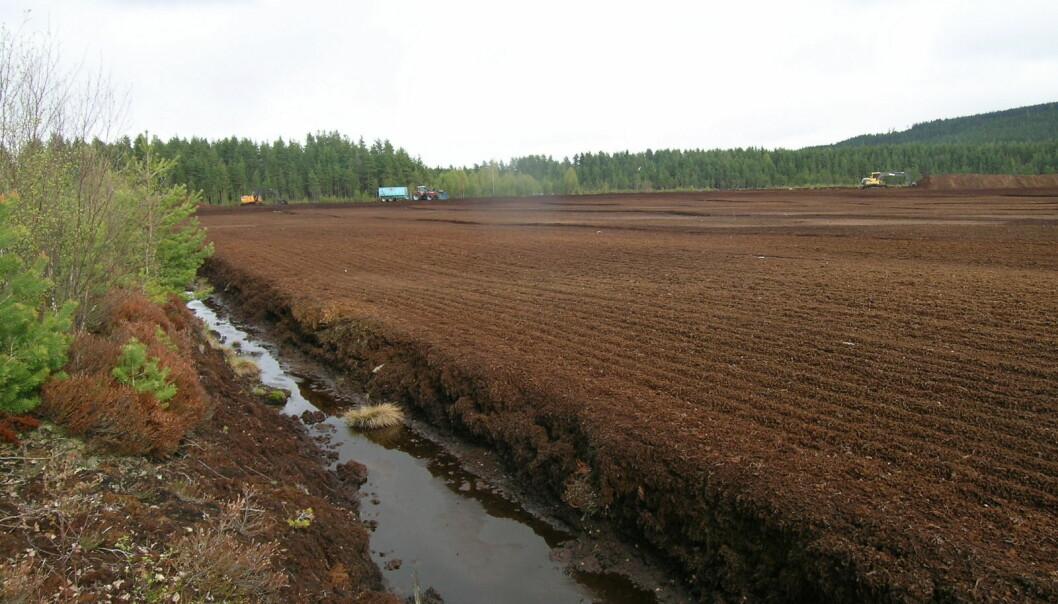 Torvuttak bør begrenses, men i dag finnes det ikke noen fullverdige erstatningsprodukter for torv i jordblandinger. (Foto: Reidun Aspmo)