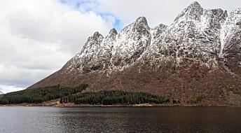 Disse fremmede treslagene kan invadere og påvirke norsk natur