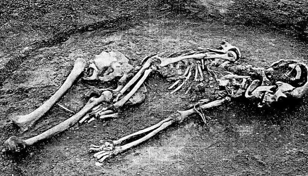 Sauer, som denne kvinnen er begravet med, finnes i graver fra hele den romerske jernalderen. Andre dyrearter finnes bare i den yngre delen og vitner om betydelig romersk innflytelse.  (Foto: Kroppedal Museum)