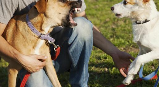 Hvem blir bitt av hunder?