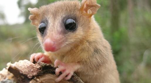 96 forskere er medforfattere på studie om regnskogpattedyr