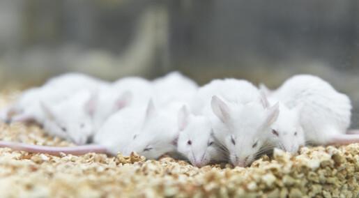 Stoff fra blodet til drapsmenn på Ila fengsel gjorde mus mer voldelige