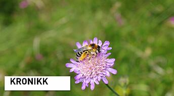 Slik kan vi redde villbiene