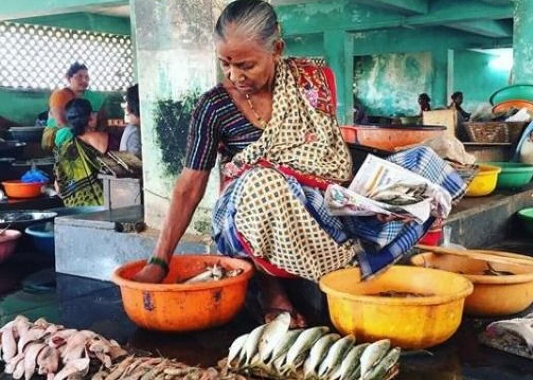 7 millioner tonn fisk og skalldyr går til spille i India. Nå etterlyser Sintef norske industripartnere i kampen mot problemet. (Foto: Guro Møen Tveit, Sintef)