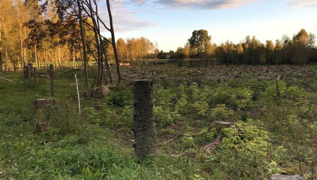 Her var det skog tidligere. Nå er skogen ryddet og gjort om til beite. Avskoging gir store klimagassutslipp, ifølge ny rapport. (Foto: Johannes Breidenbach, NIBIO)
