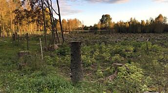 CO2-utslipp fra skog spiller liten rolle for utbyggingsplaner
