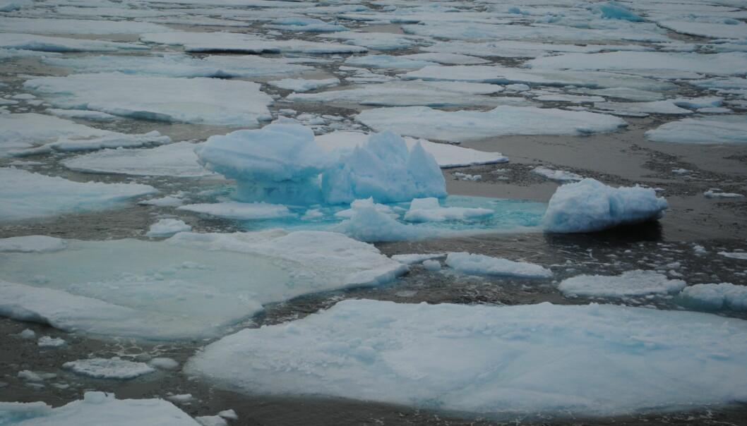Dersom temperaturen i havet stig, kan isdekket nord for Svalbard bli borte. Også dyrelivet på botnen vert påverka av høgare temperatur. (Foto: Lis Lindal Jørgensen)