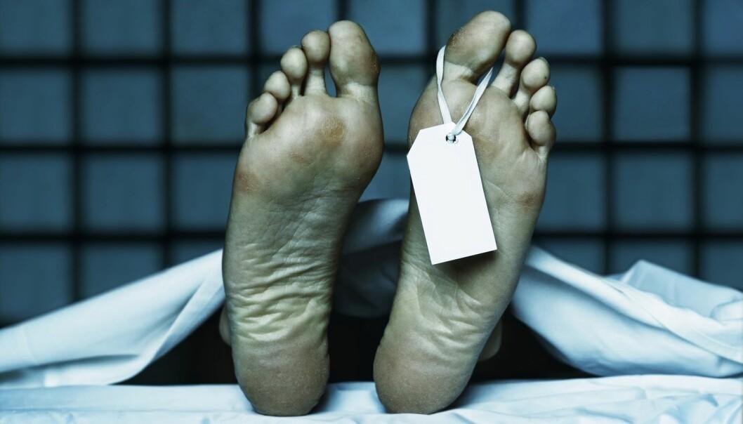 Hva skjer med kroppen etter døden? I en ny krimbok er forskning.no omtalt da en mistenkt googler dette. (Illustrasjonsfoto: jurasy, Shutterstock, NTB scanpix)