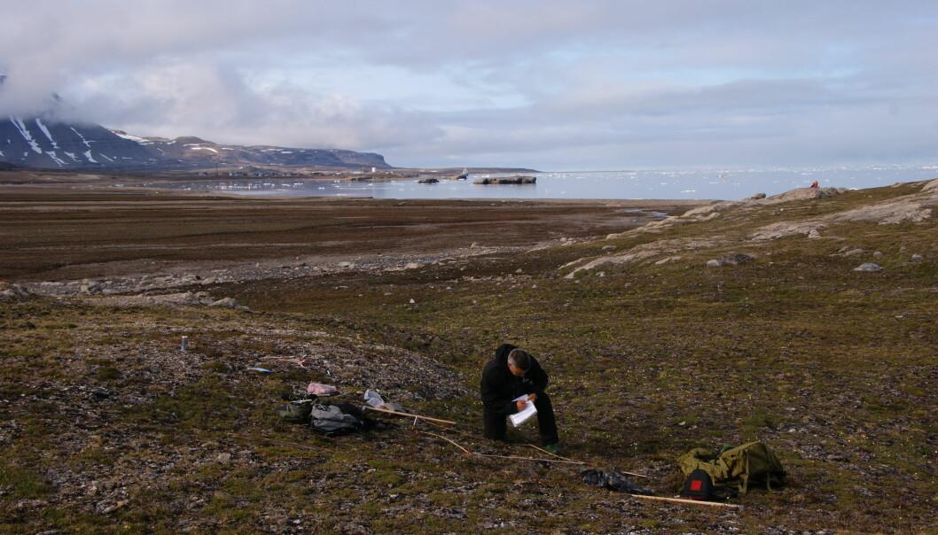 Ny forskning viser at varmere vintre på Svalbard er ikke ensbetydende med et grønnere landskap. (Foto: Trond Johnsen)