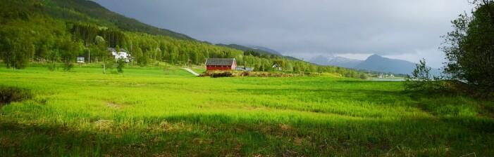 Åkersnelle (<i>Equisetum arvense</i>) på Berg ved Tromsø, 2. juni 2018. (Foto: Arve Elvebakk)