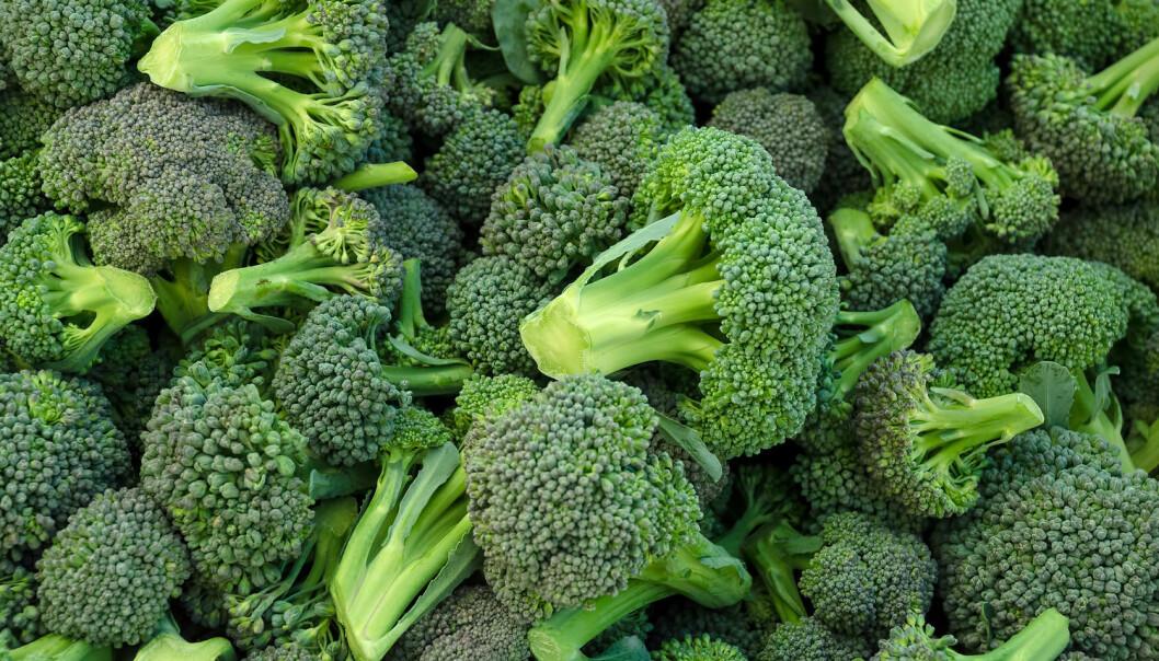 Brokkoli må lagres på riktig måte for at den skal beholde alle de sunne egenskapene sine. Den er nemlig fortsatt levende og kan reagere på omgivelsene. (Foto: Shutterstock / NTB Scanpix)