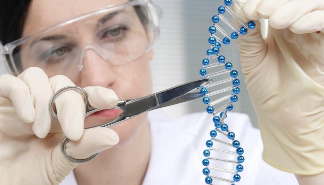 CRISPR skal erobre verden med genterapi, men teknologien har fått et tilbakeslag fordi det viser seg at menneskets immunforsvar har antistoffer mot en del av komponentene i teknologien.  (Foto: GeK / Shutterstock / NTB scanpix)