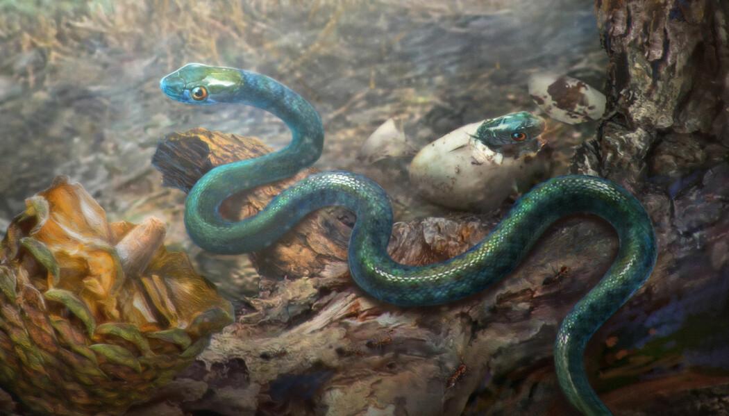 Slik ser en kunstner for seg den lille slangen som ble fanget i rav. (Bilde: Cheung Chung Tat)