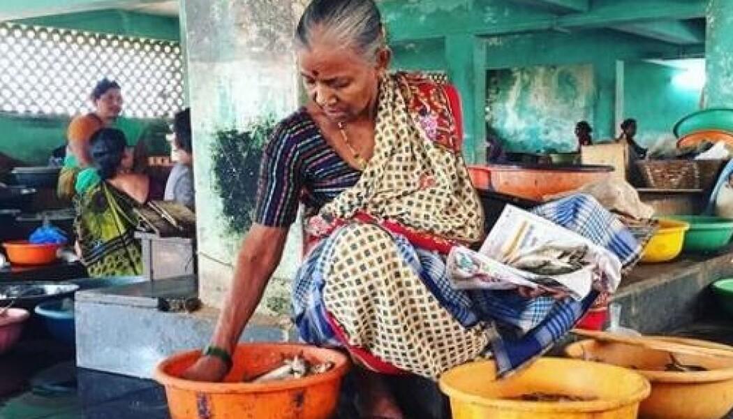 Syv millioner tonn fisk og skalldyr går til spille i India. Nå etterlyser Sintef norske industripartnere i kampen mot problemet. (Foto: Guro Møen Tveit, Sintef)