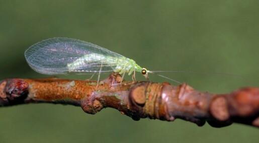 Møt Norges mindre kjente insekter