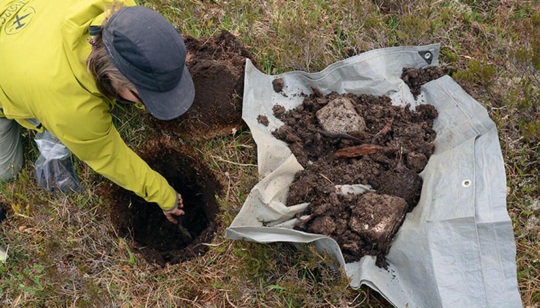 Forsker Malin Andersson graver seg ned til forvitret berg for å ta en jordprøve. (Foto: Gudmund Løvø, NGU)