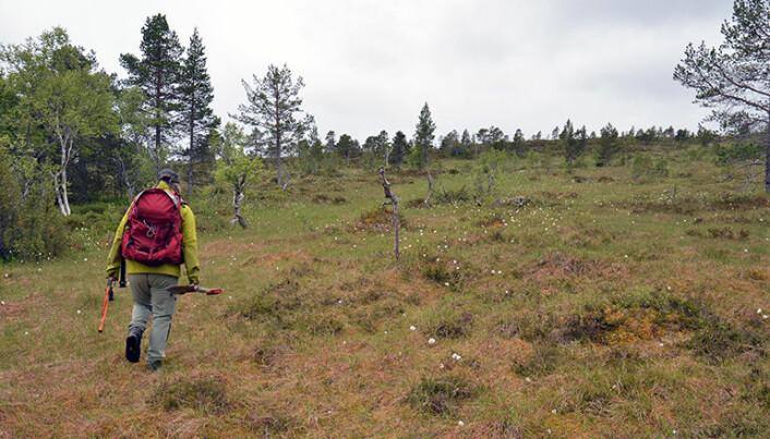 Forskerne beveger seg mye i terrenget for å finne stedene de skal ta prøvene. De tar én prøve innenfor et kvadrat på seks ganger seks kilometer. (Foto: Gudmund Løvø, NGU)