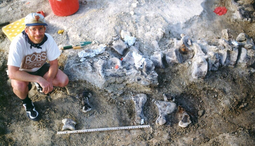 For å danne et bilde av hvor stort dette dyret var, så måler lårbeinet alene hele 2,07 meter. Likevel er ikke Brachiosaurusen i Wyoming den største dinosauren som noen gang er oppdaget. (Foto: AFP, NTB Scanpix)