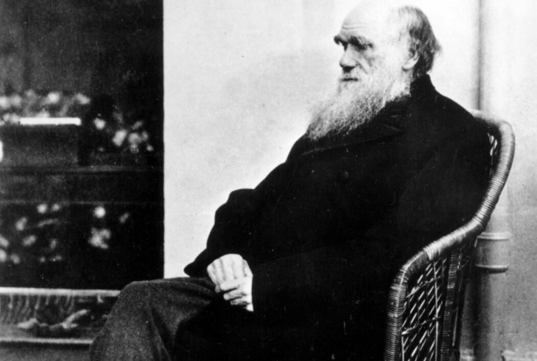 Selvsagt får geniale mennesker geniale ideer, og både Einstein og Darwin fortjener all den beundring de kan få – de utrettet store ting. Men de levde altså ikke i vakuum, de badet snarere i en elv av ideer. (Foto: AP, NTB Scanpix)