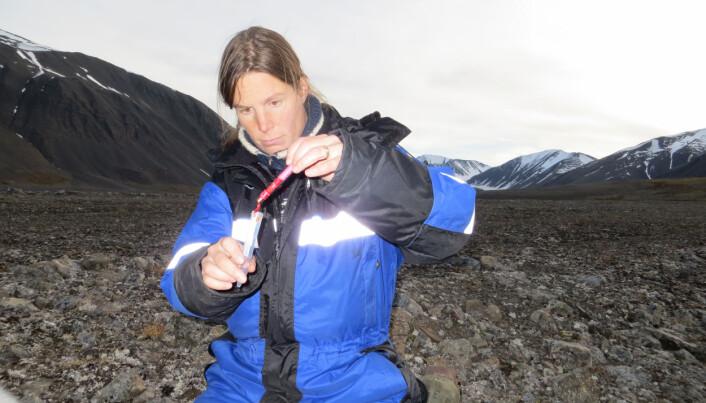 Her tar miljøgiftforsker Heli Routti fettprøver av en isbjørn under feltarbeid. (Foto: Norsk Polarinstitutt)