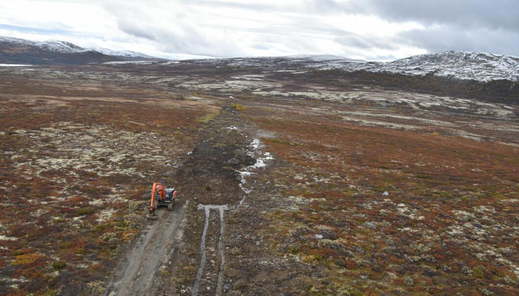 Gravemaskina fjerner veg på Hjerkinn etter standardmetoden, der opprinnelig terreng gjenopprettes og vegetasjonstuer gjenbrukes. (Foto: Dagmar Hagen)